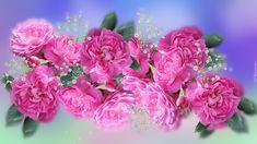 Kwiaty, Róże, Gipsówka