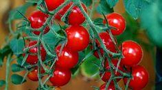 Koktélparadicsom - Creativo Vegetables, Tips, Vegetable Recipes, Veggies, Counseling
