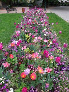 Parterre de fleurs printanières #powerpatate #optimisme