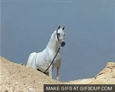 horse hoof gifs - Google Search