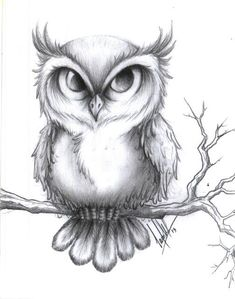 Paintings - Learn to Draw - – Zeichnen lernen – Paintings – learn to draw – draw - Owl Tattoo Drawings, Pencil Art Drawings, Bird Drawings, Art Drawings Sketches, Cute Drawings, Animal Drawings, Cute Owl Drawing, Bird Pencil Drawing, Moon Drawing