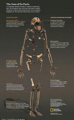Dating-Techniken menschliche Evolution Dating-Botschwana