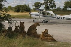 Guests are welcomed as they land on a small air-strip somewhere in Botswana. How COOL is this?!!