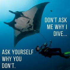 Don't ask me why I dive... Ask yourself why you don't.