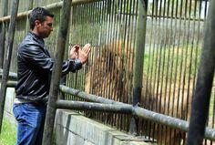 Javier y Simba: Amistad entre garras en el zoológico de la capital hondureña - Diario El Heraldo