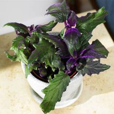 fantastic foliage houseplants - Flowering House Plants Purple