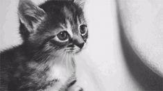 Meow kitty :'3