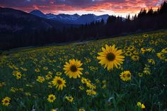 The Sun Worshippers : White River National Forest - Breckenridge, Colorado : Nate Zeman - Fine Art Nature Photography