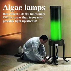 "Go photosynthesis! Stanford scientists are researching algae lamps that collect 150-200 times more CO2 in a year than trees - may possibly light up streets. This type of electricity production doesn't release carbon into the atmosphere. ""This is potentially one of the cleanest energy sources for energy generation."" experimenter WonHoung Ryu said."