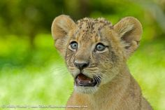 Utterly Astonished by Ashley Vincent on 500px