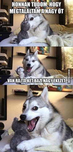 7 Pun Dog Puns That Will Instantly Brighten Your Day! - Funny Text - - 7 Pun Dog Puns That Will Instantly Brighten Your Day! The post 7 Pun Dog Puns That Will Instantly Brighten Your Day! appeared first on Gag Dad. Funny Husky Meme, Funny Dog Jokes, Funny Animal Quotes, Crazy Funny Memes, Dog Memes, Funny Animal Pictures, Funny Relatable Memes, Funny Dogs, Pun Husky