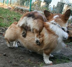 """Annabelle and Miss Otis. """"Excuse me Mom, bur my butt seems to be stuck on you."""""""