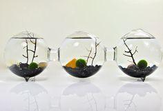 Marimo Moss Ball Three Orb Aquarium // Three by eGardenStudio