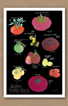Image of Heirloom Tomatoes Modern ID Poster