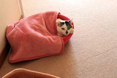 興味がないの? - http://iyaiyahajimeru.jp/cat/archives/66191