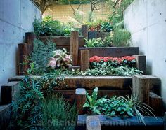 A tiny basement space in a Tokyo suburb imaginatively converted into a step-garden by Japanese gardener Masayuki Yoshida. It uses descending ledges made from old railway sleepers to draw light and plants down to this level from the upper garden.