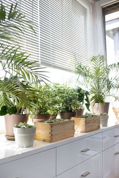 plants in the windowsill