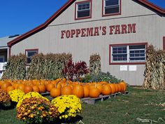 Foppema's Farm, Northbridge MA.