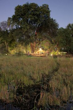 Gunns Camp - Blends in with Natural Surroundsings - Maun, Botswana Vintage Safari, Okavango Delta, Sight & Sound, Game Reserve, Wilderness, Around The Worlds, African, Camping, Island