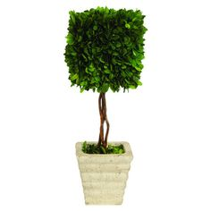 Add a natural touch to your office or entryway with this preserved boxwood topiary, featuring lush preserved greenery for a country-club touch.