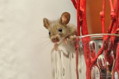 """Hey, what's up""?  Cute little mouse in a vase."