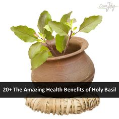 20+ The Amazing Health Benefits of Holy Basil ==>