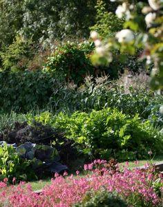 Love the way veggies look in a garden #edible_gardening #garden #potager
