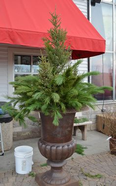 How to Creat a Spruce Tip Pot (photo tutorial) Outdoor Christmas Planters, Christmas Urns, Christmas Garden, Outdoor Christmas Decorations, Winter Garden, Christmas Holidays, Outdoor Pots, Christmas Wreaths, Christmas Crafts