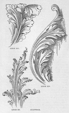Image result for French Etching of Acanthus Leaves