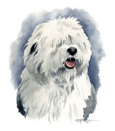 OLD ENGLISH SHEEPDOG Watercolor Painting Art Print Signed By Artist D J Rogers