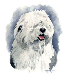 ANTIGUO perro pastor inglés acuarela lámina por k9artgallery