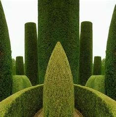 English garden - such impeccable topiaries!