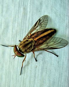 Me:I hate Horse flies I wish God didn't make them. my Cousin: He didn't Gods wife did.Me: God has a wife! of course she  was referring to Hera Zeus wife.lol