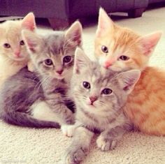 Give your kitten a good start with a starter kit. (image via lovethispic.com)