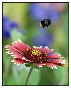 """""""Busy As A Bee..."""""""
