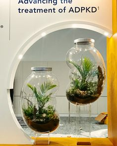Giant kidney bean shaped terrariums for a medical expo at the ICC Sydney, featuring live mixed palms, foliage, ferns, sea sponge and succulents, living moss Sea Sponge, Kidney Beans, Terrariums, Palms, Ferns, Floral Arrangements, Sydney, Floral Design, Succulents