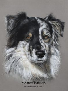 colorful animal art Animation is part of Colorful Animal Paintings Fine Art America - Animal Pastels Pastels animaliers et équins Photographies Peintures Colorful Animal Paintings, Colorful Animals, Cute Animals, Realistic Animal Drawings, Cute Animal Drawings, Art Drawings, Pastel Drawing, Pastel Art, Dog Paintings