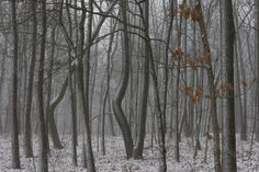 Peter Essick, Snowstorm, White Rock Mountain, Ozark Highlands Trail, Arkansas