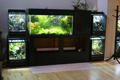 Planted tank (and other tank) displays in a house / aquascaping