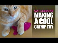 How to Make a Catnip Toy for Your Cat - YouTube