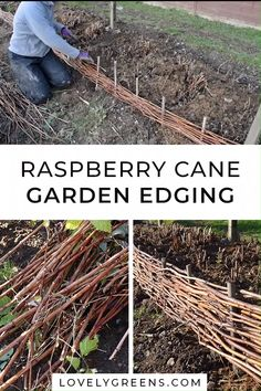 Use old raspberry canes to create garden edging Use pruned raspberry . - Use old raspberry canes to create garden edging Use pruned raspberry canes to create att - Garden Borders, Garden Paths, Garden Landscaping, Garden Shrubs, Garden Guide, Wood Garden Edging, Decorative Garden Fencing, Garden Gates And Fencing, Edging Plants
