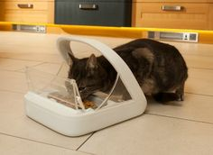 Giveaway: Win a SureFeed Microchip Feeder from SureFlap