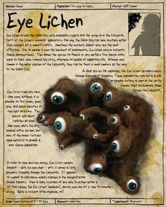 "The Eye Lichen from ""Labyrinth."""