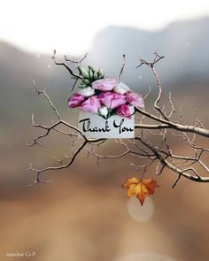 Thank You Messages Gratitude, Thank You Wishes, Funny Thank You, Happy Birthday Wishes Cards, Thank You Mom, Thank You Greetings, Thank You Quotes, Birthday Thank You, Birthday Greetings