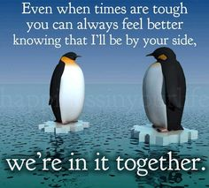 ... Love Quotes on Pinterest Penguin Quotes, Love quotes and Quotes