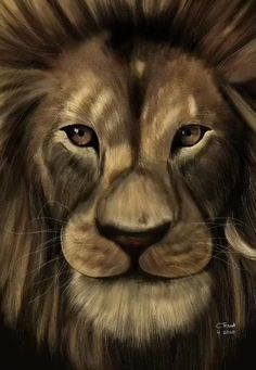 Lion Images, Lion Pictures, Animal Paintings, Animal Drawings, Lion Live Wallpaper, Iphone Wallpaper, Elephant Artwork, Tiger Artwork, Lion Photography