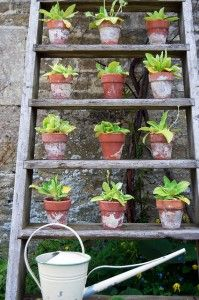 An old ladder may no longer be safe for human use but it may be perfect against a wall as a vertical garden feature.