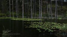 The Lake with the Lilies by ChristosTheodorou #nature #mothernature #travel #traveling #vacation #visiting #trip #holiday #tourism #tourist #photooftheday #amazing #picoftheday