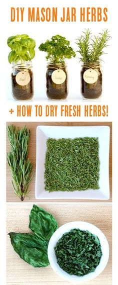 DIY Mason Jar Herb Garden + How to Dry Fresh Herbs! | Tips at TheFrugalGirls.com