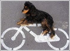 everyone loves to ride #cycle
